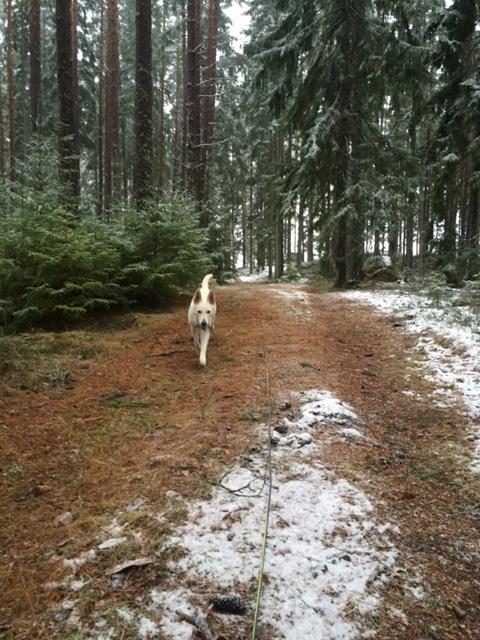 i-skogen2